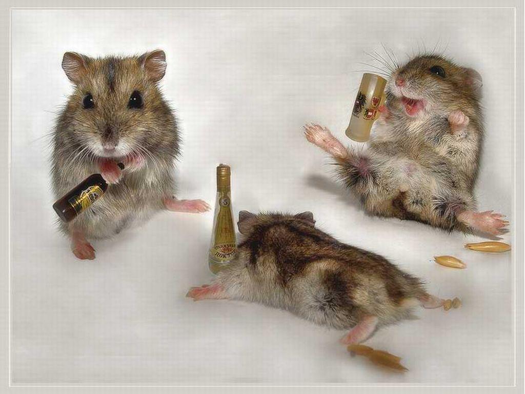 Peliukų tūsas