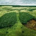 Prarūkyti gamtos plaučiai