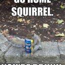 Girta voverė :D