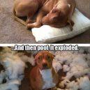Gyvenimas auginant šunį :)