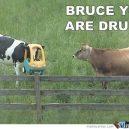 Karvės viena kitą iš karto supranta..:D