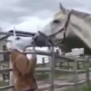 "Arklys išsigando ""arkliažmogio"""